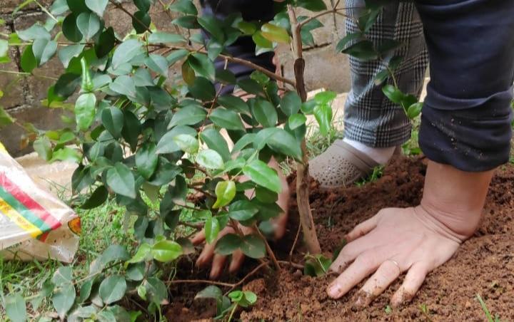 CNBB: plantar uma árvore no dia de finados em memória dos que se foram